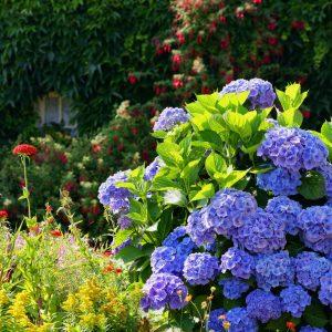 Plantes&Fleurs