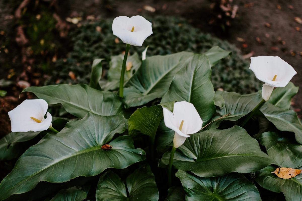 Plantes vertes fleuries
