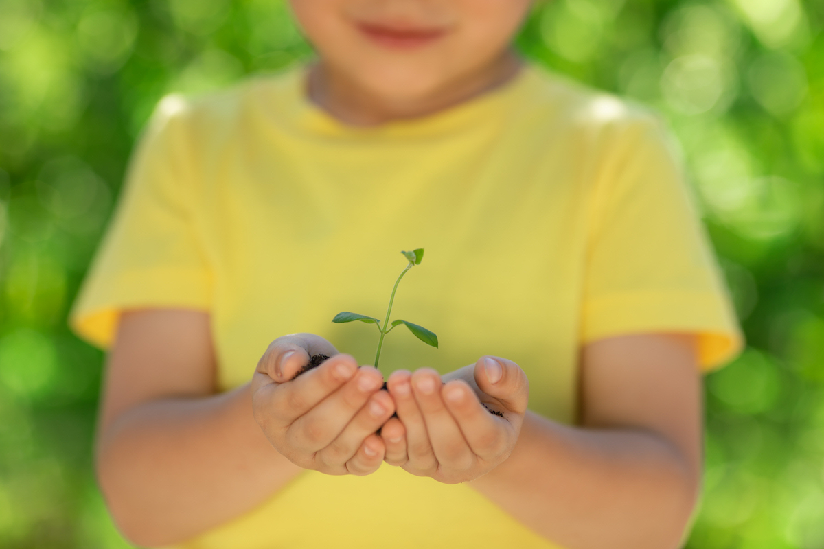 Jeune plante