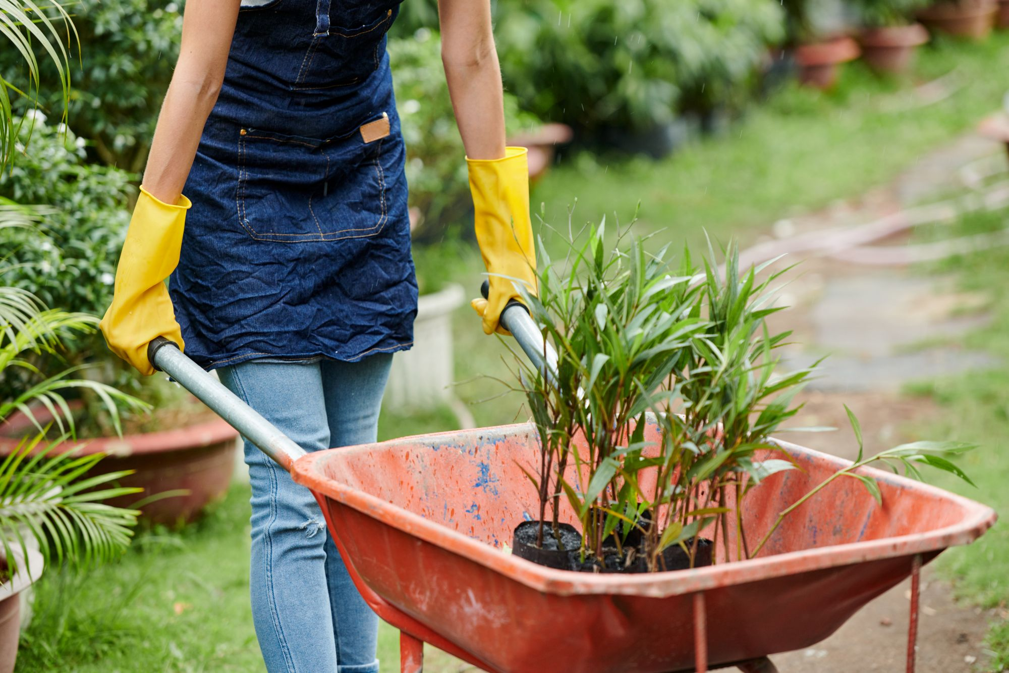female-gardener-pushing-wheelbaroow-8ATRQGX