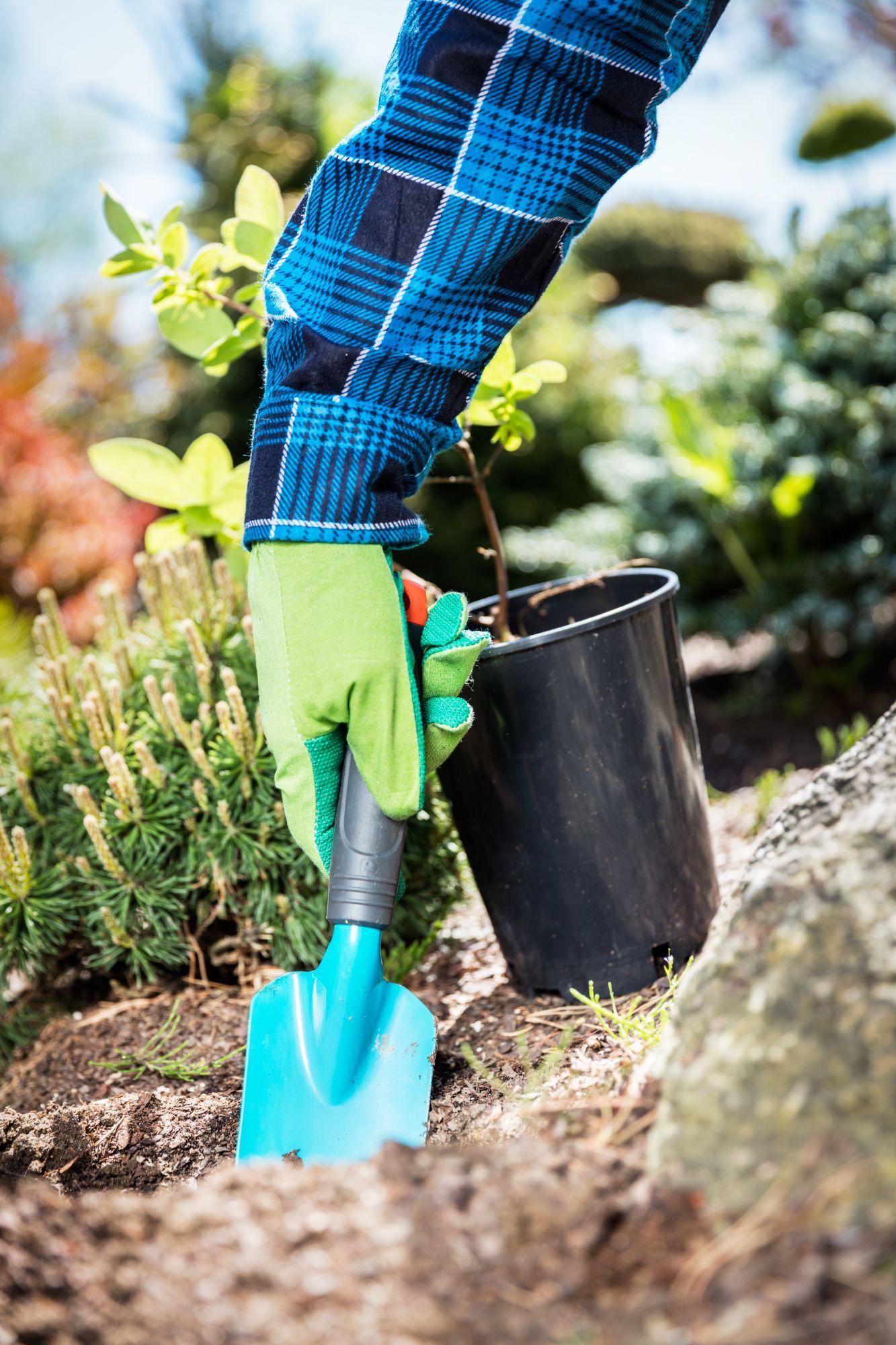 gardener-digging-with-a-shovel-PZ6GFML