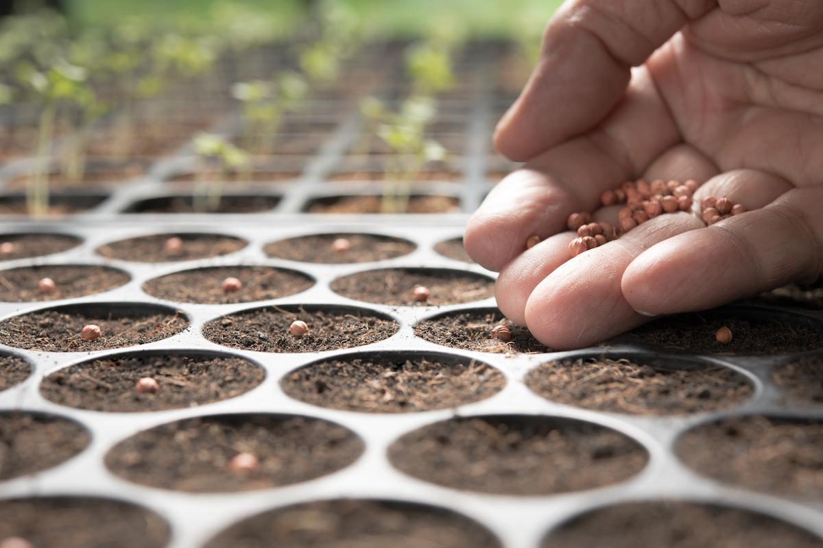 Semer des graines